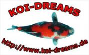 Koi-Dreams