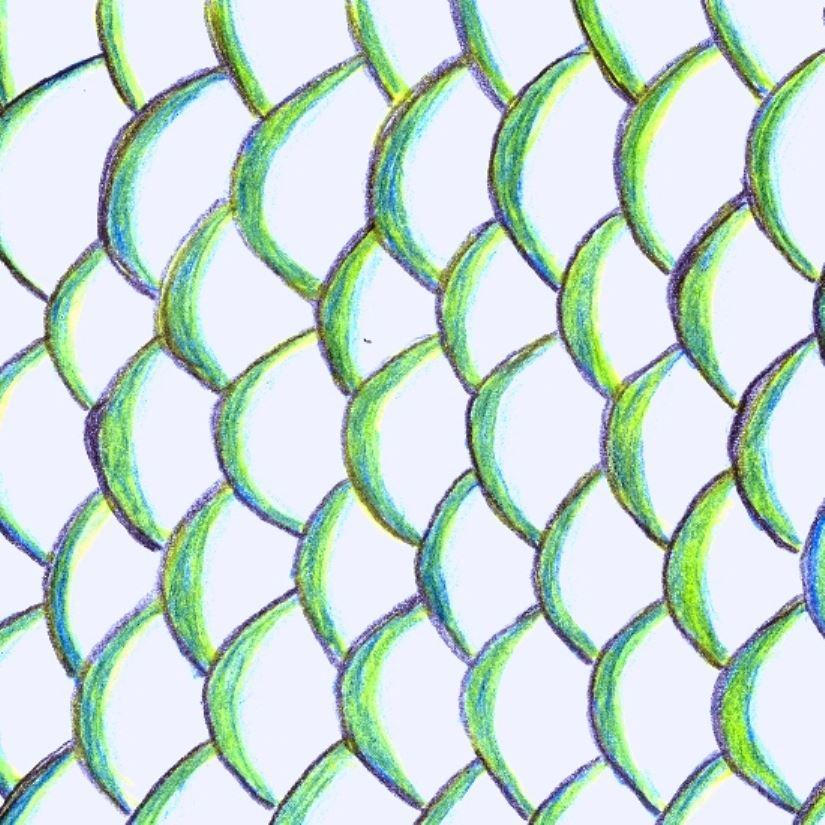 Kinginrin koi karpfen steckbrief hauptgruppe a for Karpfen steckbrief